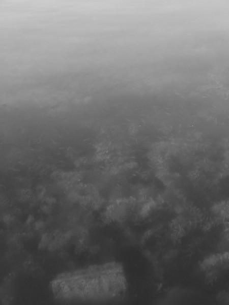 noir blanc, entre surface et fond du bord du lac