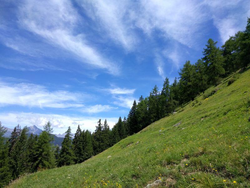 Prairie fleurie de montagne, entourée de Mélèzes
