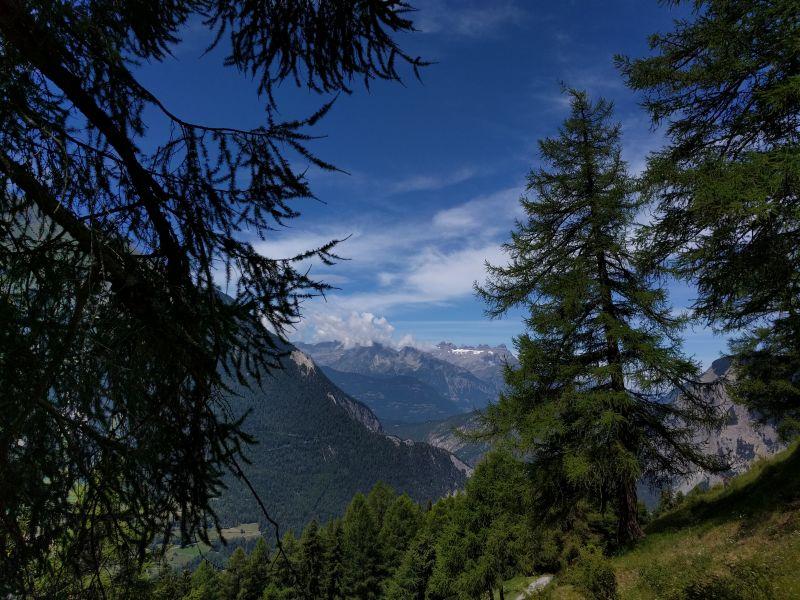 Vue sur le Mont Chemin, puis les Dents du Midi, avec au premier plan des Mélèzes