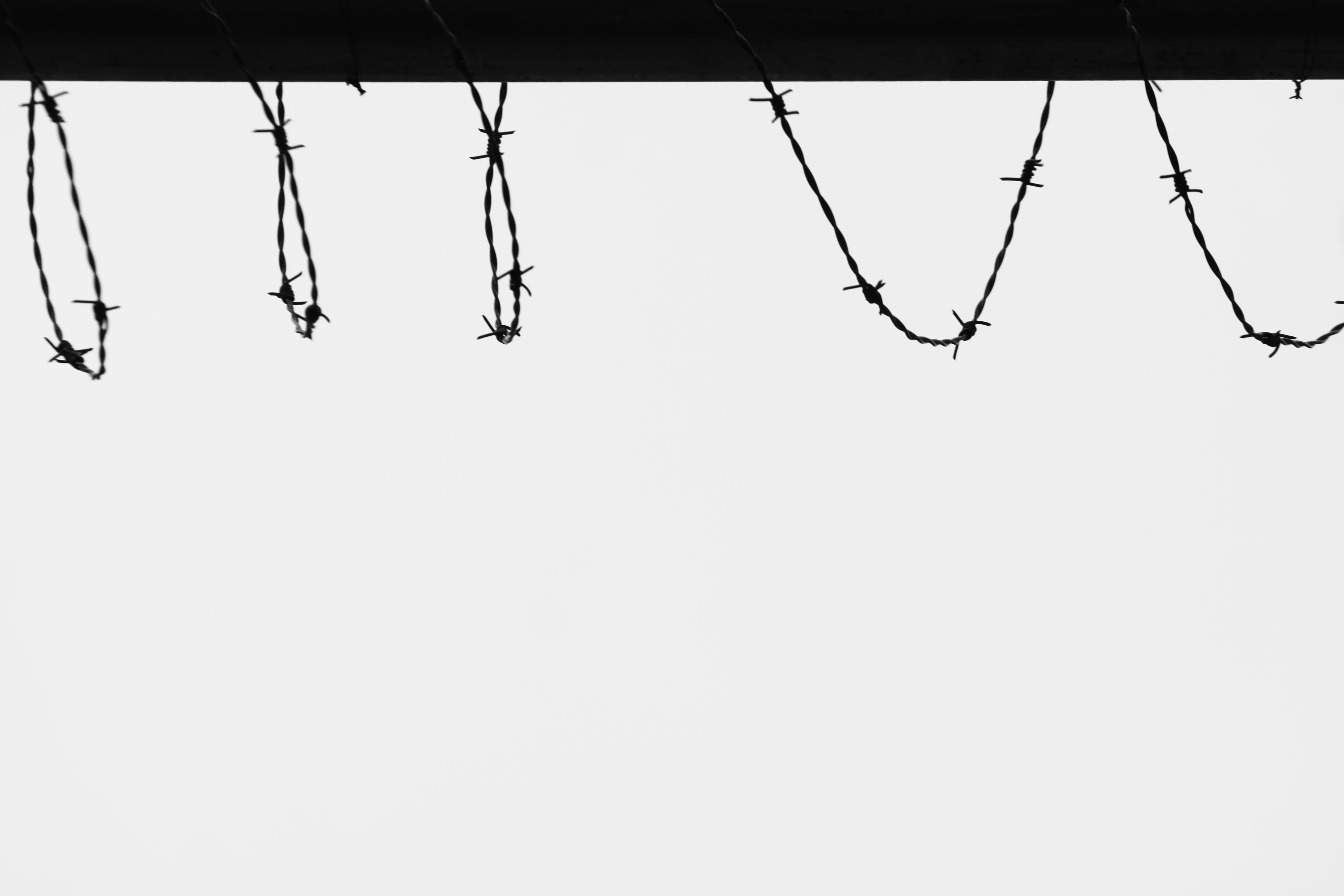 bouts de fils de fer barbelés noir sur fond blanc, contrastes forts