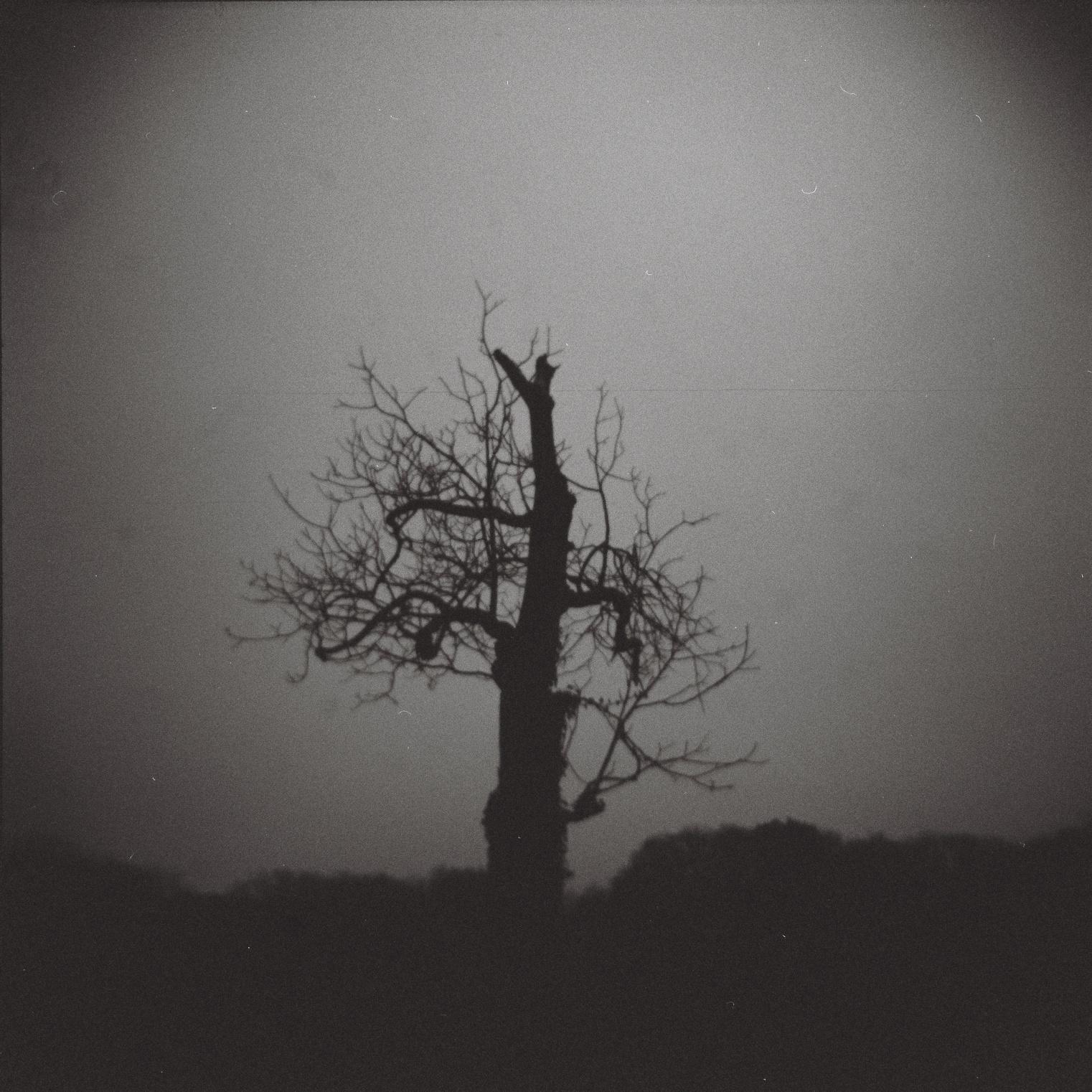 tronc d'arbre avec quelques branches, photos noir-blanc très sombre, format carré, lomographie