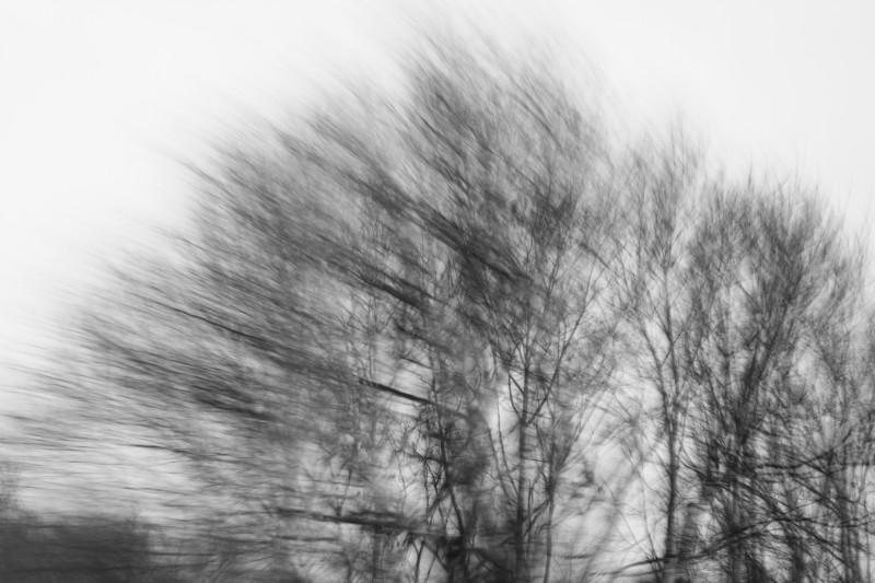 arbres flous phofographiés en vitesse lente, noir-blanc