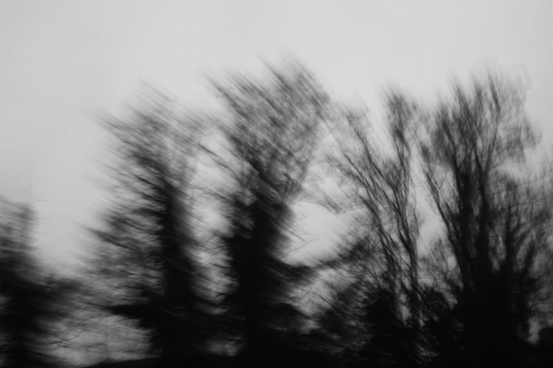 arbres photographiés en vitesse lente, noir-blanc II