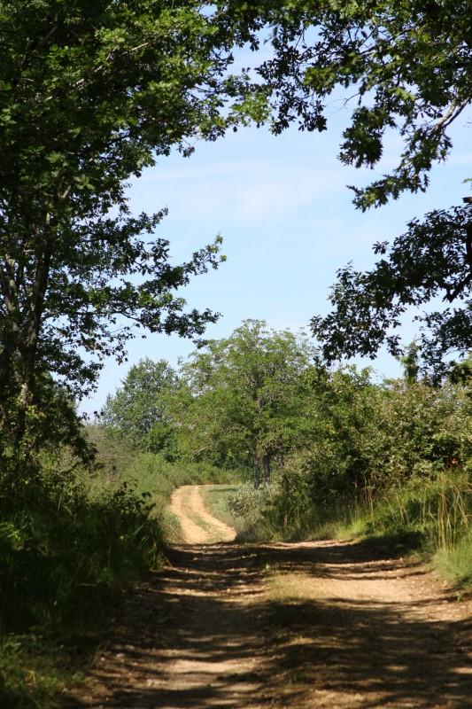 chemin sortant de la forêt, encadré d'arbres, orientation portrait