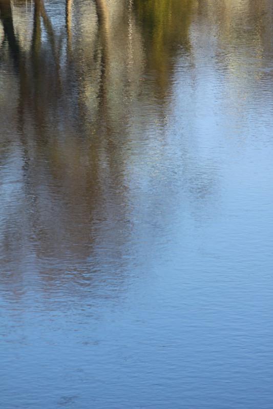 reflets d'arbre dans l'Aar