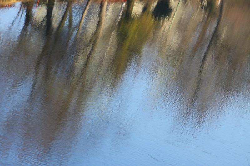reflets d'arbres dans l'eau de l'Aar