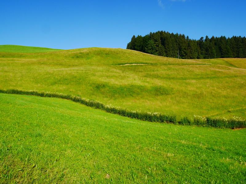 Paysage valonné, herbe verte, champ, forêt et ciel bleu.